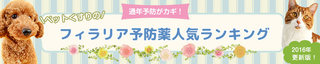 firalia-renew2015-landingpage-header-new.png